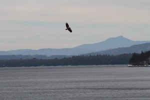 eagles-001